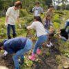 シープファームで食育「サツマイモ掘り」